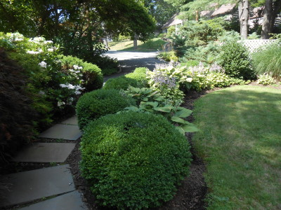 boxwoods, shade loving plants, deer resistant plants