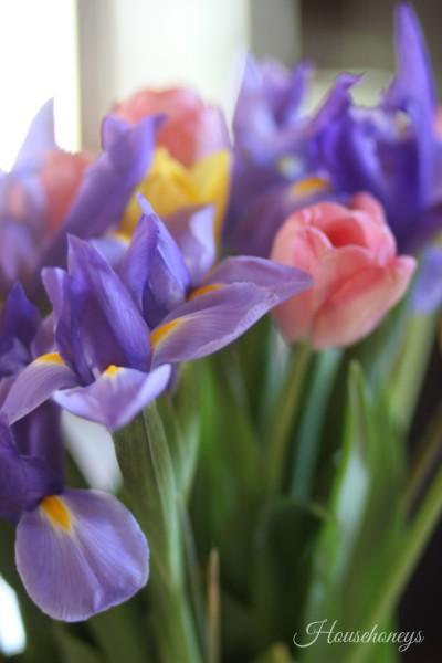 Tulips and Iris