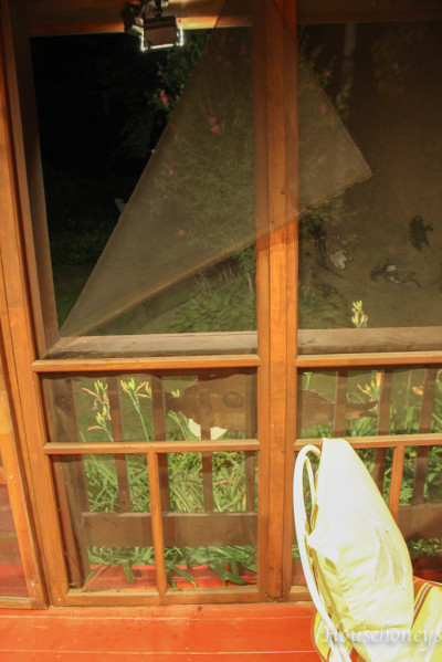 porch scrfeen
