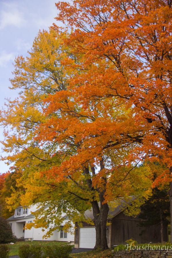 autumnintolland-19