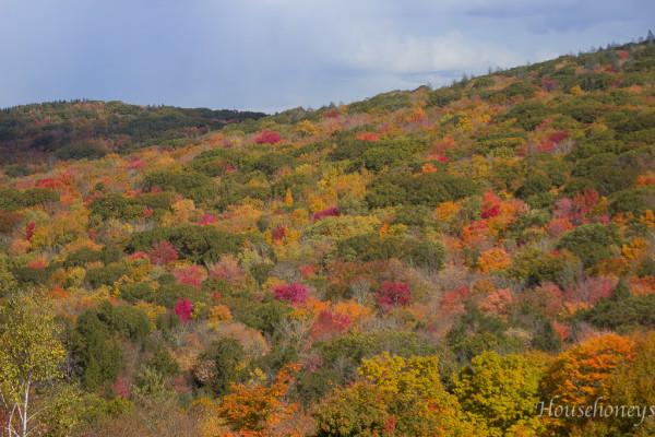autumnintolland-5