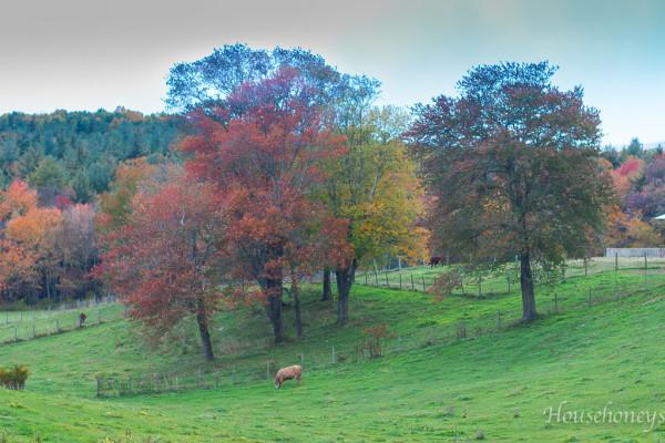 autumnintolland-8