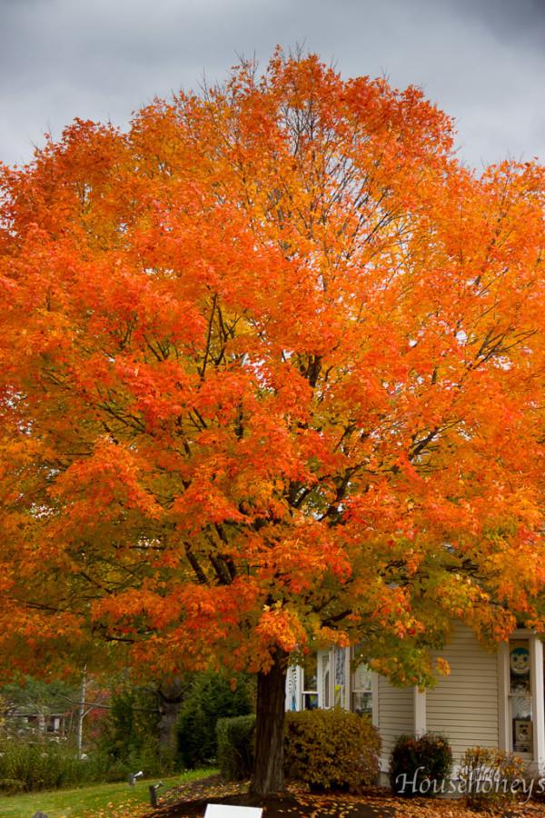 autumninvermont-13