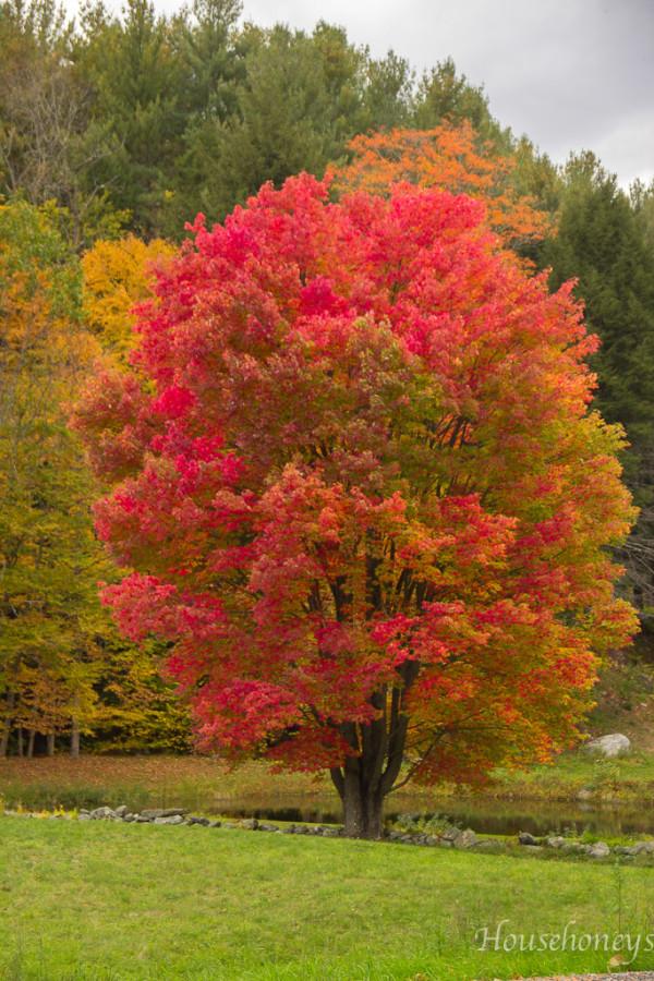 autumninvermont-14