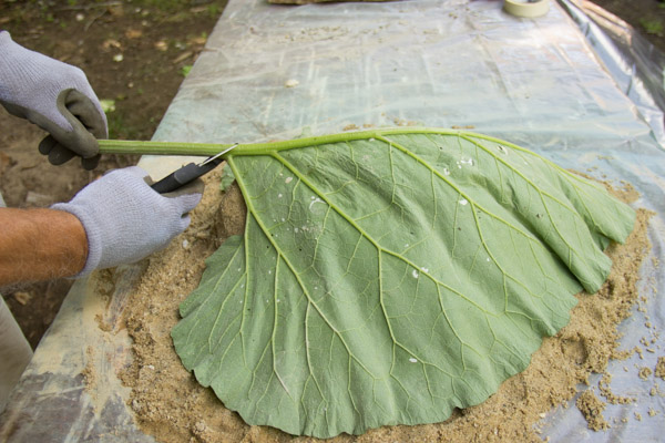 cement leaf tutorial-6