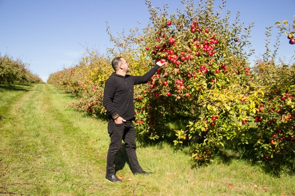 applepicking-4