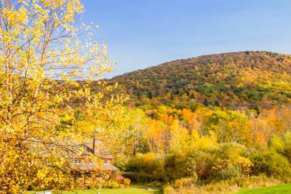 fall-foliage-22