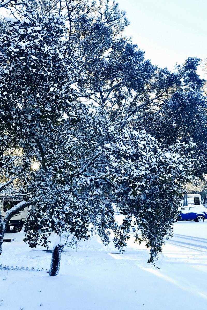 Snow in wilmington